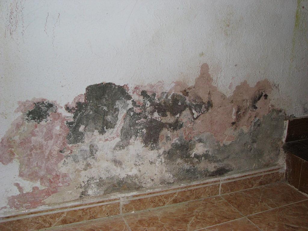 Trucos de bricolaje c mo eliminar las humedades de las - Como evitar humedades en las paredes ...